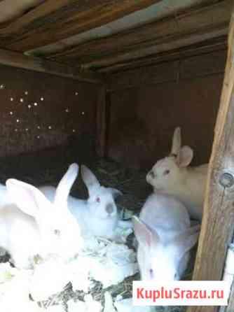 Кролики Смоленск