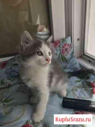 Кошечка с самым добрым сердцем ждёт именно вас Саратов