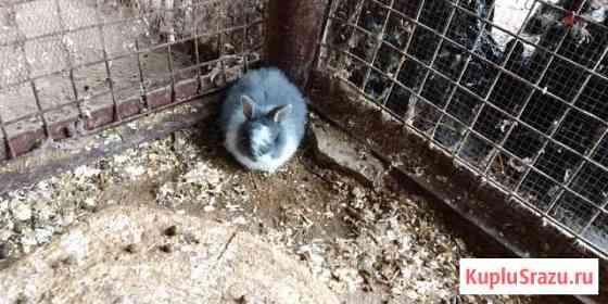Декоративные кролики Биокомбината