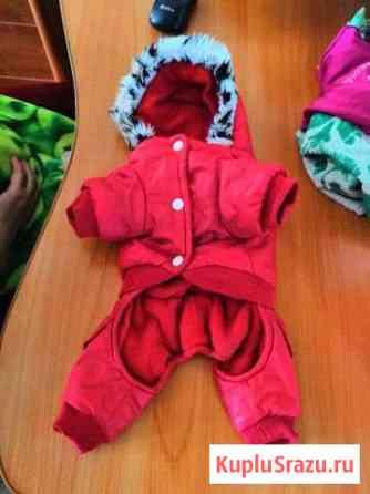 Одежда для маленькой собачки Воркута