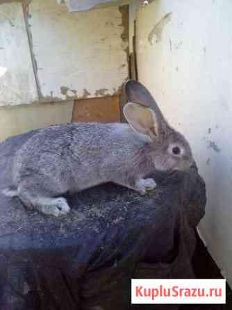 Крольчата Волгоград