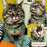 Кошка Шерри ищет дом