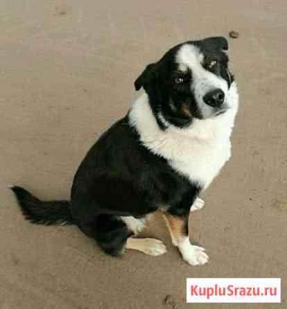 Невероятно ласковая и нежная собачка Йошкар-Ола