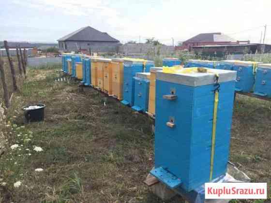 Улья с пчелами и всем необходимым. Торг Грозный