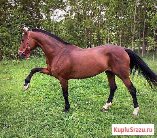 Лошадь Санкт-Петербург