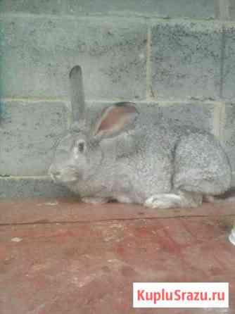 Продаем кроликов Комсомольское