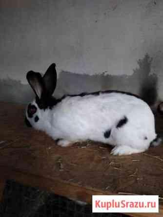 Кролики Липецк