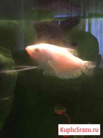 Рыба 8см Сочи