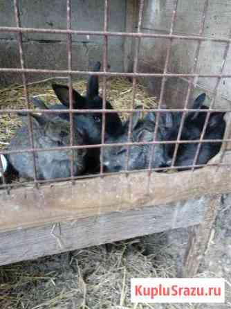 Кролики Югорск