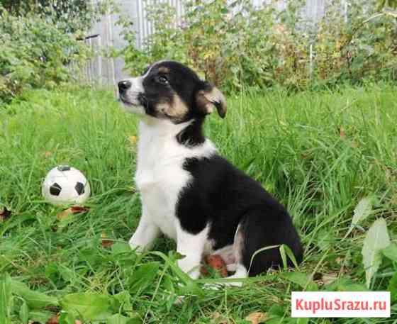 Милые щеночки ищут любящих хозяев Домодедово