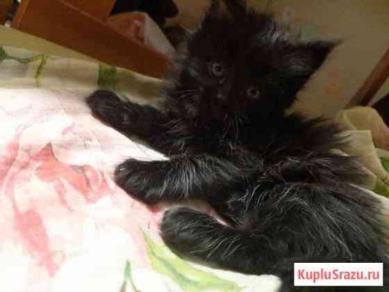 Очаровательные котята Вятские Поляны