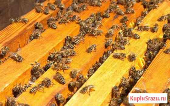 Пчелосемьи Липецк