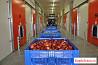 Хранение яблок в холодильных помещениях с газовой