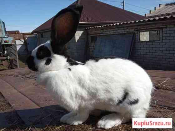 Кролики Терезе
