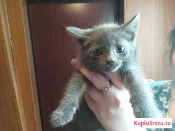 Котята Усинск