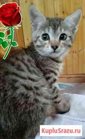 Котенок(девочка) Гудермес