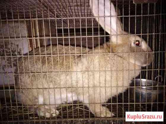 Продаются кролики, можно на мясо, от 2кг Ухолово