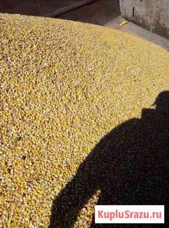 Кукуруза краснодарская Икон-Халк