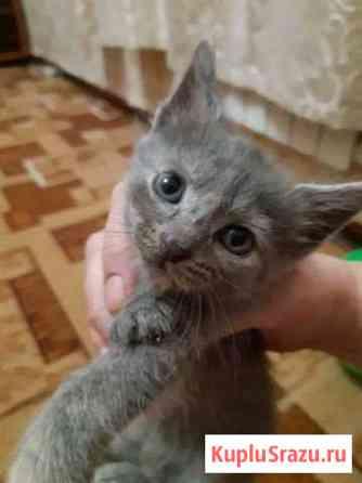 Котята в добрые руки Саратов