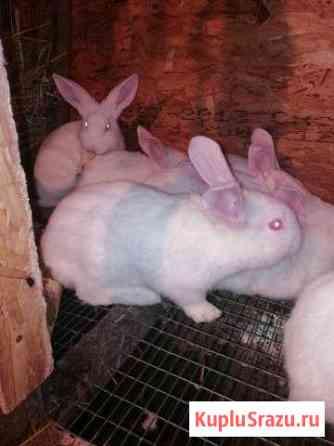 Кролики Нижневартовск