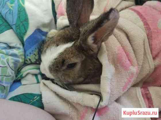 Декоративный кролик Омск