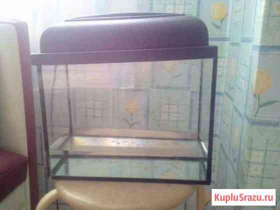 Продаю 2-х черепах в месте с аквариумом на 10 л Сургут