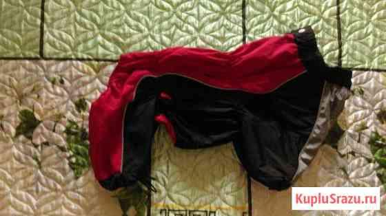 Комбинезон для собаки (кобель, длина 41 см) Оренбург