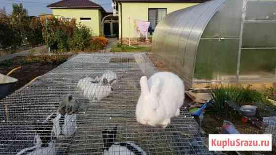 Кролики с ярмарки Волгоград