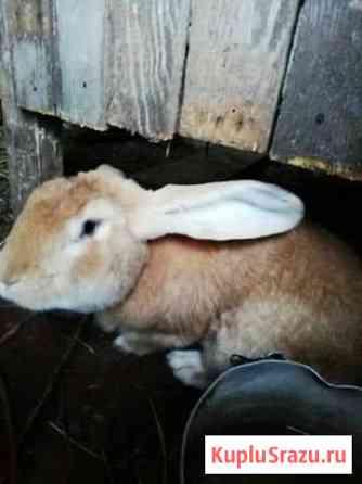 Кролик Набережные Челны