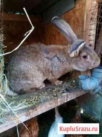 Кролики на развод Белгород