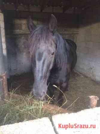 Лошади Усть-Джегута