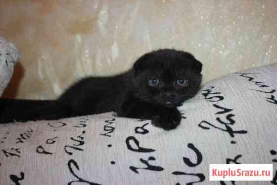 Продажа котят Нижневартовск