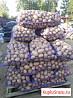 Картофель и овощи урожай 2019 от производителя