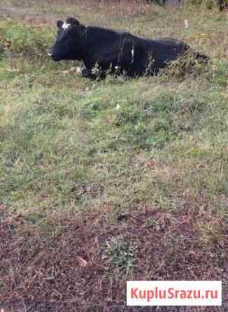 Бычки Саранск