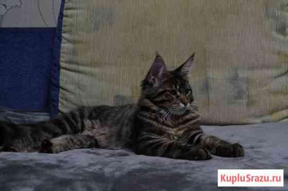 Котята Мейн Кун Багратионовск