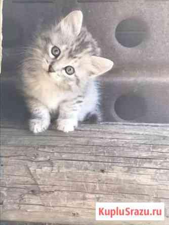Отдаю котят в хорошие руки Астрахань