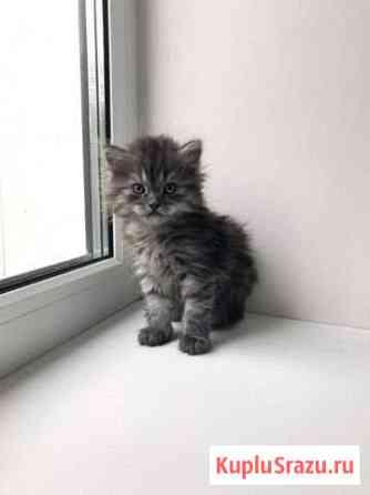 Кошечка 1 месяц Липецк