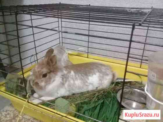 Продам кролика Печора