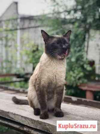 Котик ищет заботливую семью Курган