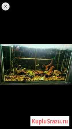 Продам аквариум Северск