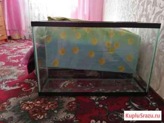 Аквариум Петропавловск-Камчатский