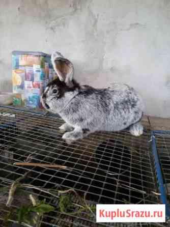 Кролики Калининград