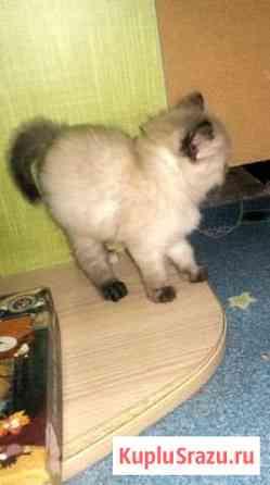 Отдам котят в хорошие руки Чита