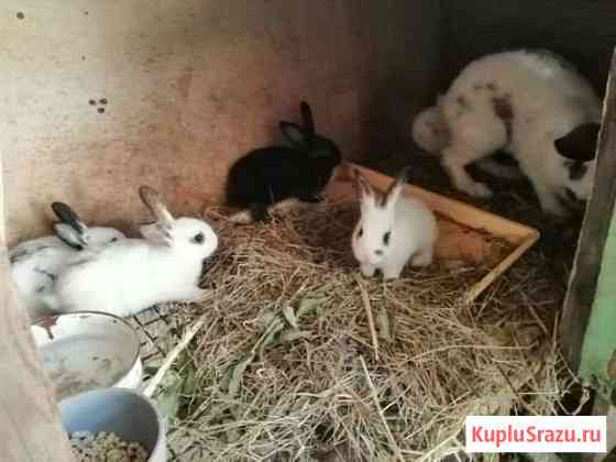 Продам крольчат Хабаровск