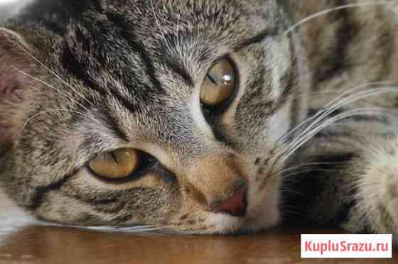Домашняя кошка Пермь