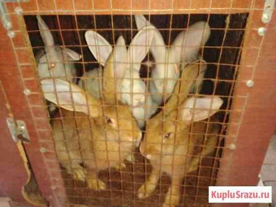 Кролики Комсомольск-на-Амуре
