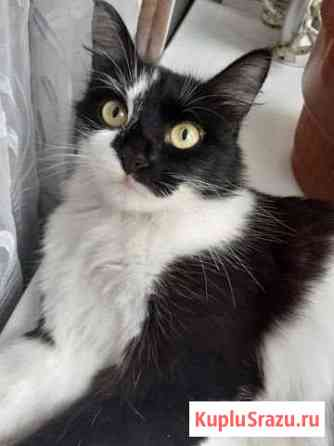 Кошка Бирск