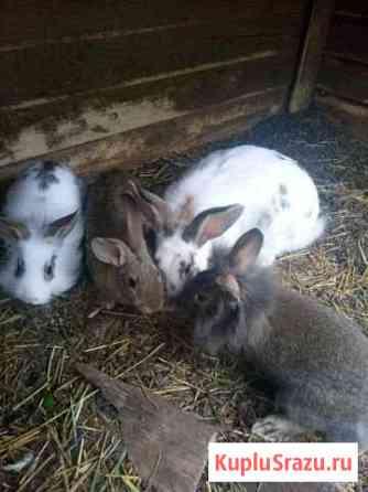 Кролики Набережные Челны