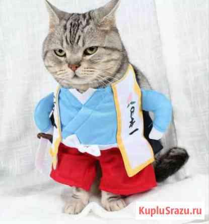 Забавный костюм для животных Чита