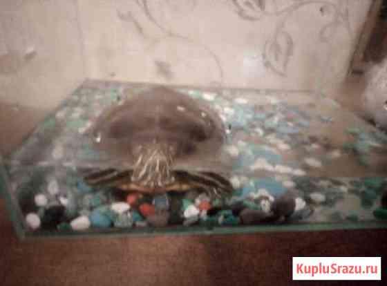 Продам черепаху Челябинск